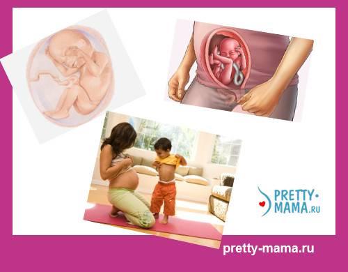 Стресс беременность 20 недель