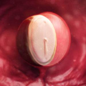 Плод на 4 неделе беременности