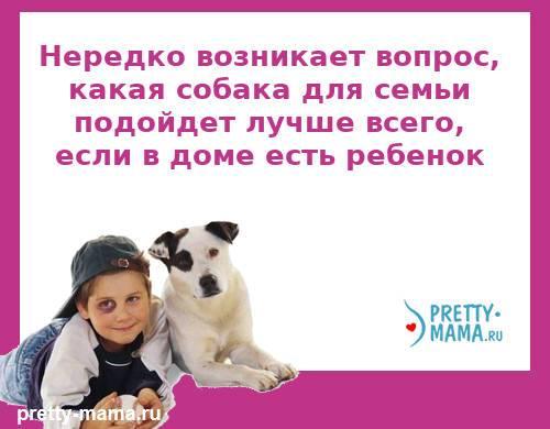 какая собака для семьи подходит лучше
