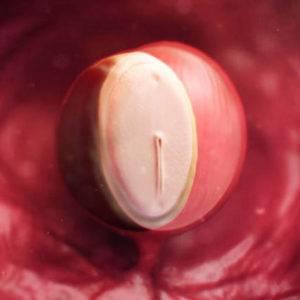 Первый месяц беременности — ощущения, анализы, развитие плода || Живот после месяца беременности