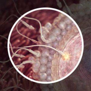 Сперматозоид в яйцеклетке